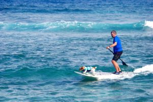 dr-mark-kemenosh-stand-up-paddle-board-with-jack-russel-terrier